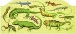 Canvas LIZARDS  1251-2