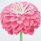 Canvas PINK ZINNIA  139C-9