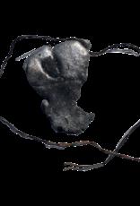 SWI HEART OF IMPALA