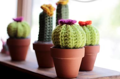 everlasting cactus friend class