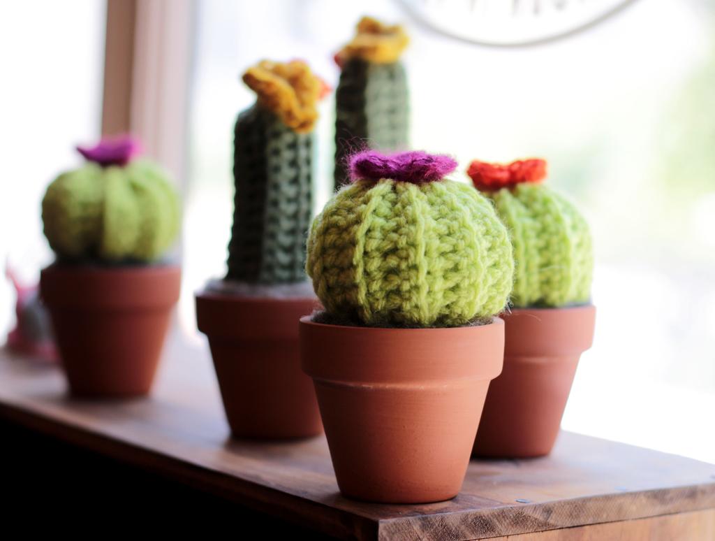 everlasting cactus friend
