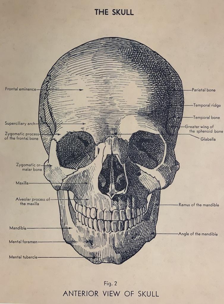 "Italy Cavallini Print, Skull, 20"" x 28"""