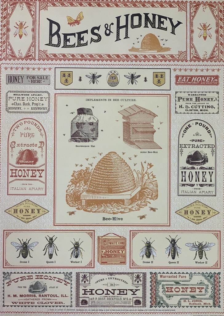 """Italy Cavallini Print, Bee, 20"""" x 28"""""""