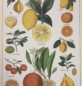 """Italy Cavallini Print, Citrus, 20"""" x 28"""""""
