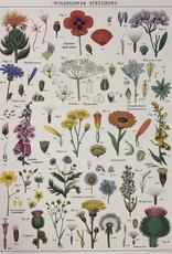 "Italy Cavallini Print, Wildflowers, 20"" x 28"""