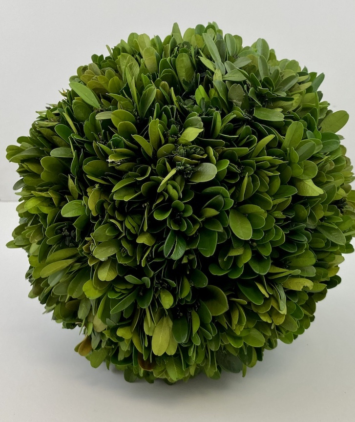 "8"" Boxwood Ball"