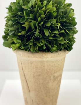 Boxwood Short