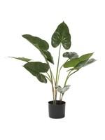UMA Enterprises Artificial Anthurium Leaf in Pot