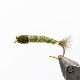Crane Fly Larva - Per 6