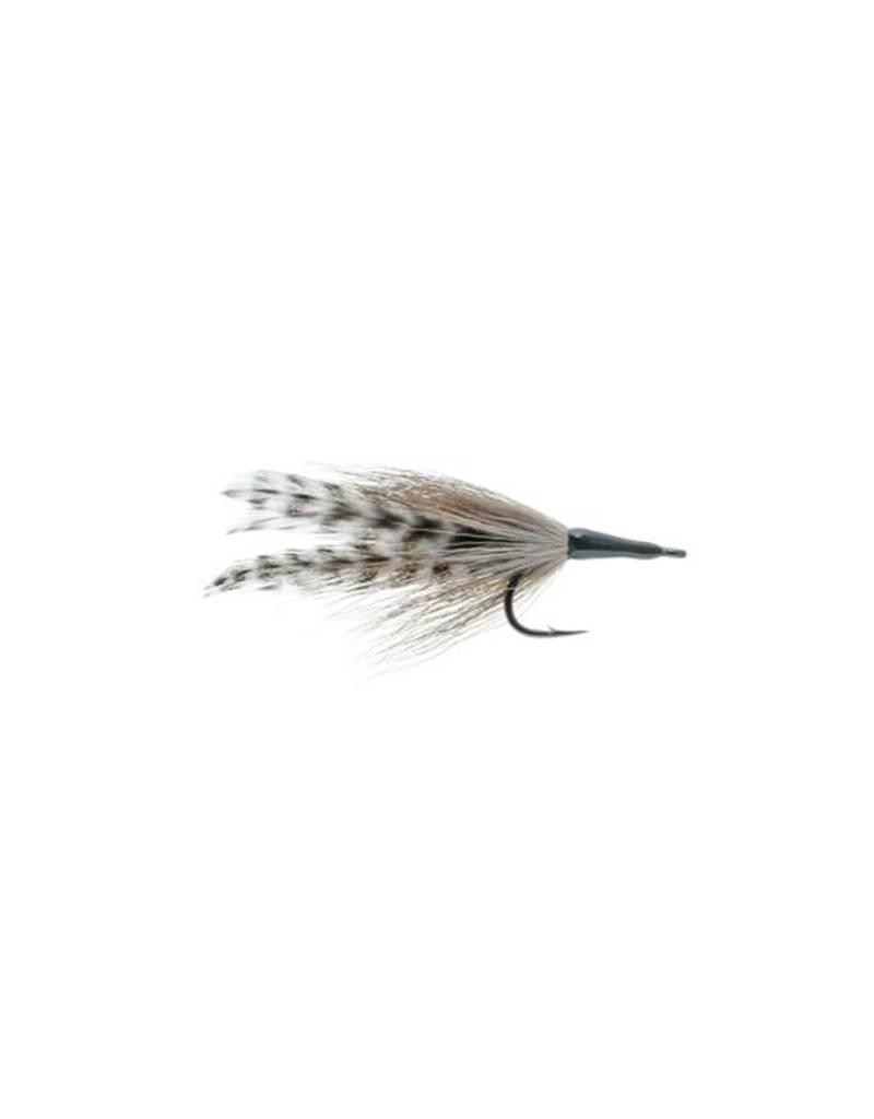 Tarpon  Cockroach, Small