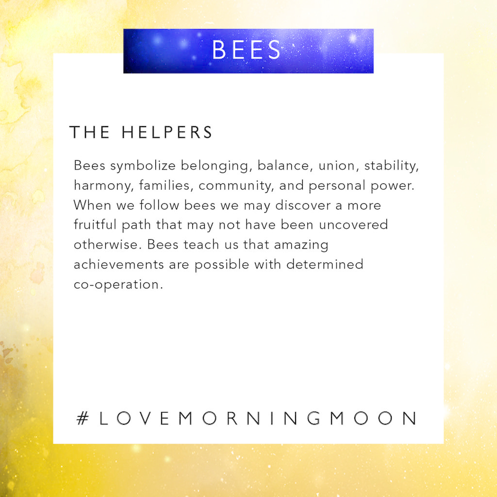 LoveMorningMoon The Helpers<br /> <br /> Bees symbolize belonging, balance, union, stability, harmony, families, community, and personal power. When we follow bees we may discover a more fruitful path that may not have been uncovered otherwise. Bees teach us that amazing achievement