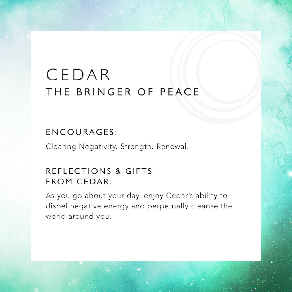 LoveMorningMoon The Bringer of Peace<br /> <br /> Cedar has been revered for its spiritual significance for thousands of years. It is known as a powerful medicine in many cultures, celebrated for spiritual protection and its ability to heal and purify. Many people believe cedar prom