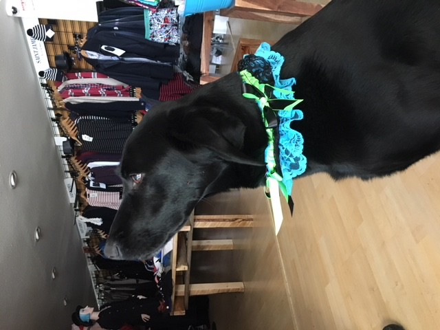 Sportees Garters - Dog Collar