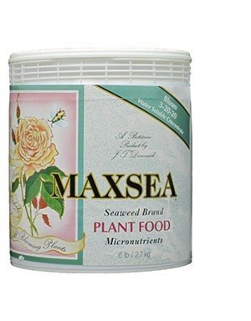 Maxsea Maxsea Bloom