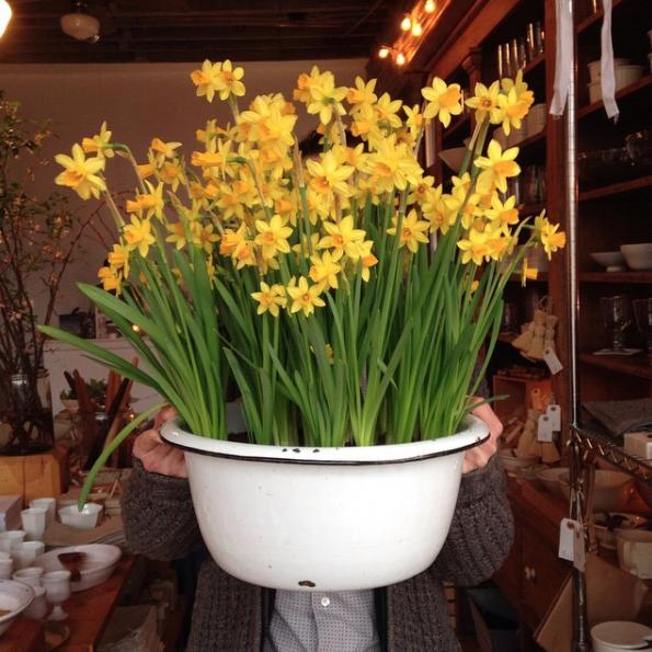 #daffodilbomb