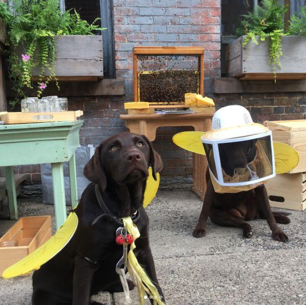 Honey Bee Party!