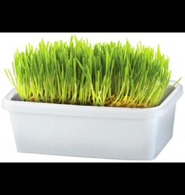 Bell Rock Growers PET GREENS Meadow Self Grow Tub 5oz