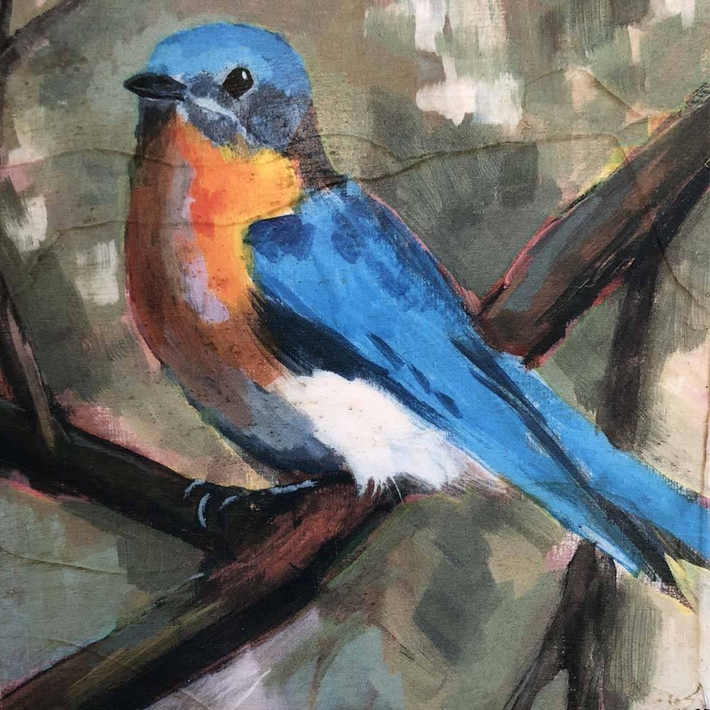 cody blomberg cody blomberg 6x6 bluebird