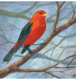 cody blomberg cody blomberg 6x6 male summer tanager
