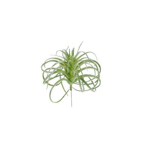 indaba indaba small air plant