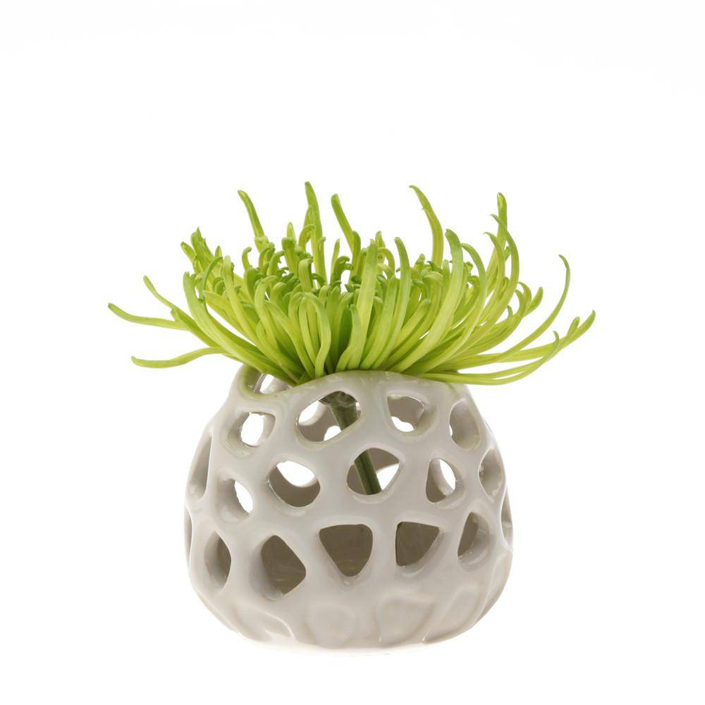 chive chive gideon plant moon air plant holder
