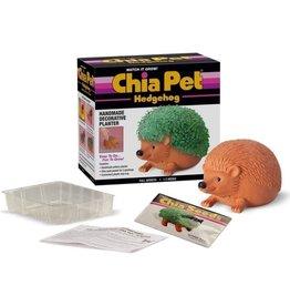 Chia chia pet hedgehog