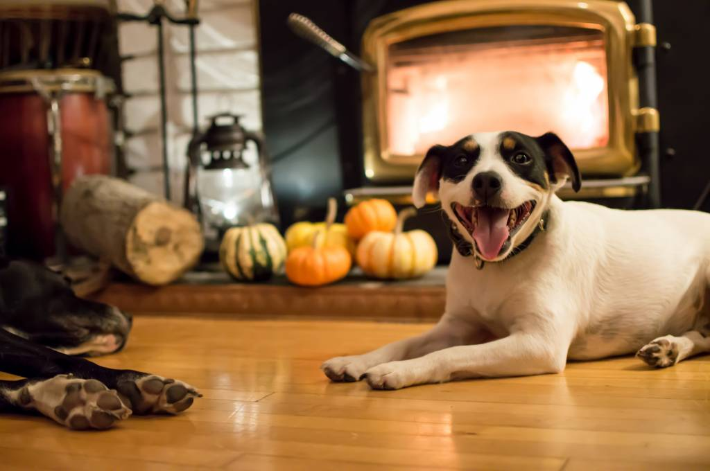 Keep Your Dogs Safe on Thanksgiving