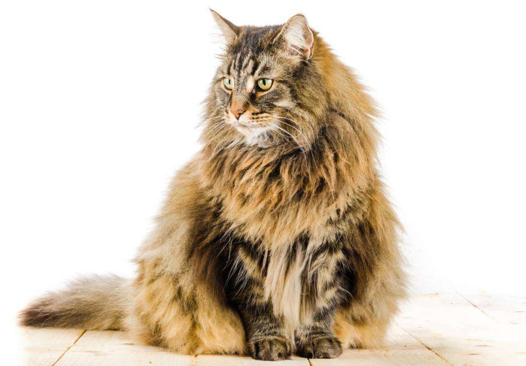 My Cat Has Hairballs – What Do I do?