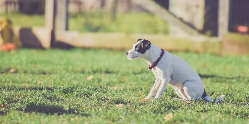 Potentially Dangerous Items Outdoors That Can Harm Your Pet