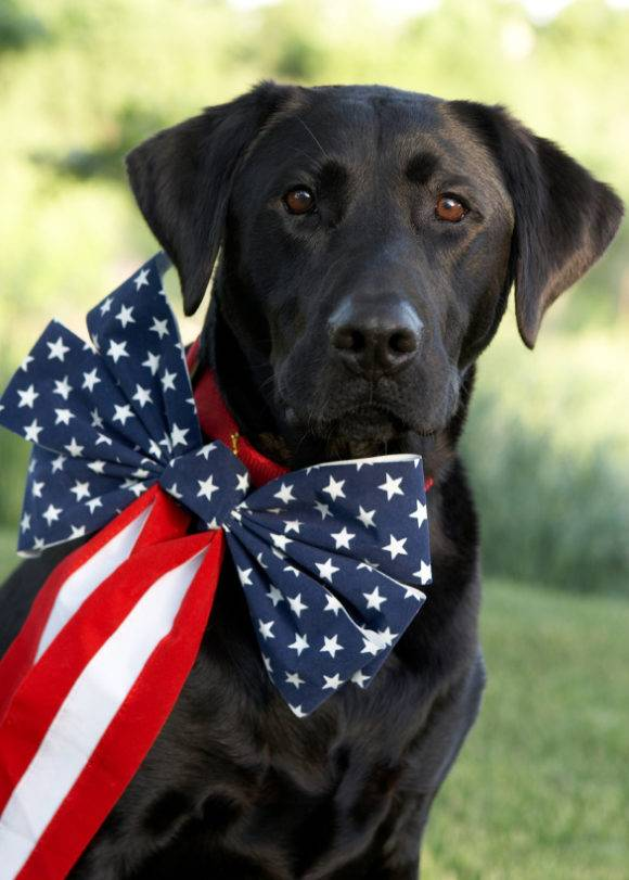Keep Your Pets Safe This July 4th