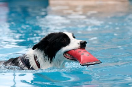 Keep Your Dog Safe Around Your Pool
