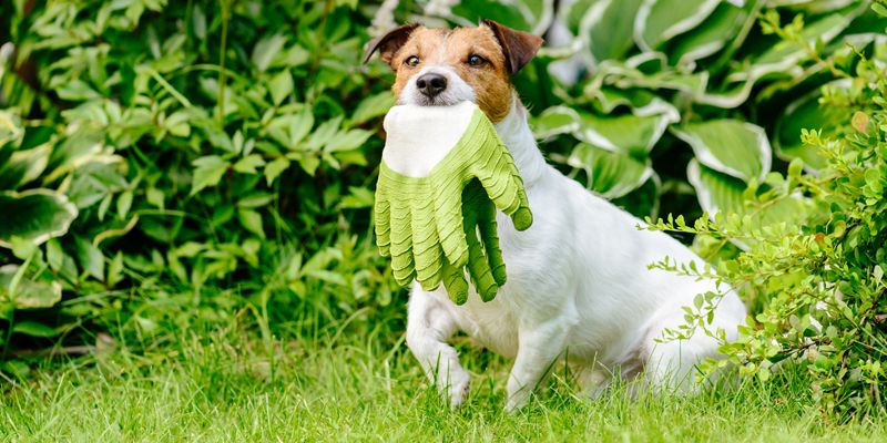 Popular Flowers & Plants That May Be Harmful to Your Pet
