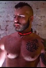 Breedwell Glow Breedwell Puppy Collar