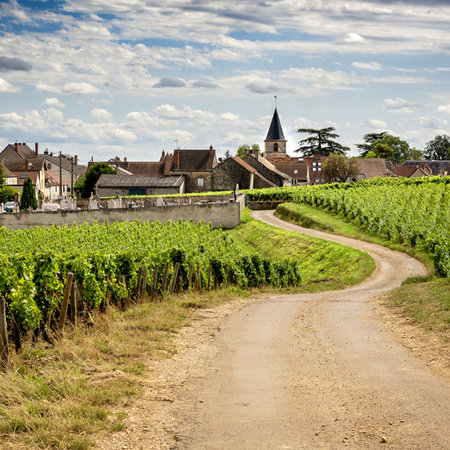 Bourgogne: Beyond the Basics