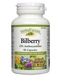 Natural Factors Natural Factors Bilberry Standardized Extract 90 caps
