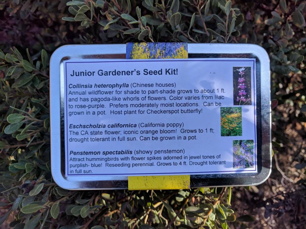 Junior Gardener's Seed Collection