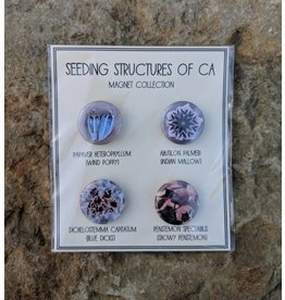 Seeding Structures of CA Magnets