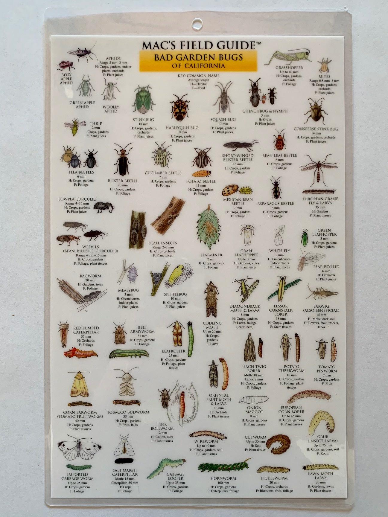 Mac's Field Guide- Garden Bugs of California