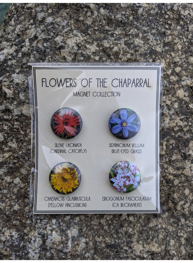 Flowers of the Chaparral Magnets