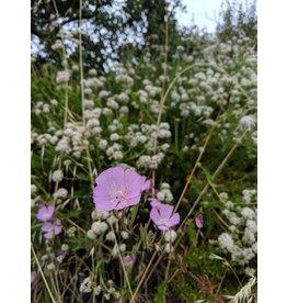 Regional Ecology Series (Seed)
