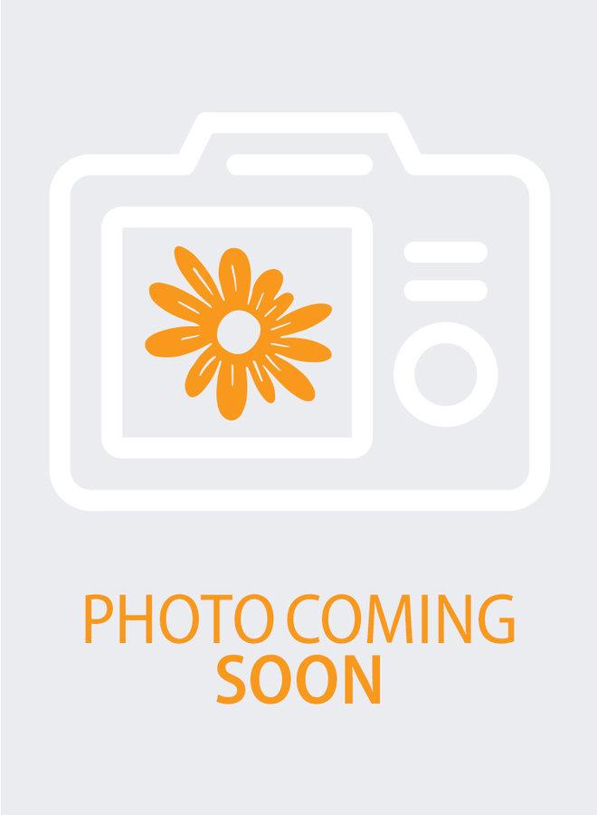 Monardella linoides - Narrow Leaved Monardella, Flaxleaf Monardella (Plant)