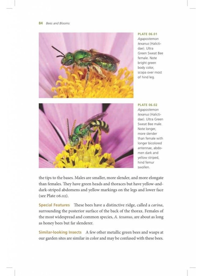 California Bees & Blooms: A Guide for Gardeners and Naturalists