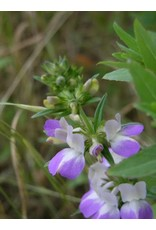 Collinsia heterophylla - Chinese Houses (Seed)