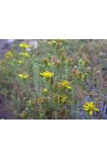 Deinandra minthornii - Santa Susanna Tarweed (Seed)
