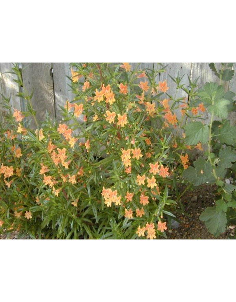 Diplacus longiflorus - Sticky Monkeyflower (Seed)