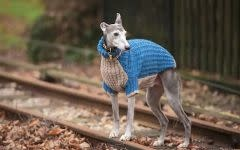 Dogs in Jumpers : 12 practical knitting projects