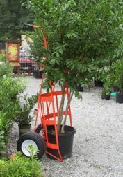 """Border Concepts Log Cart with Tray Orange 1600# Capacity 35"""" Wide x 72"""" High"""