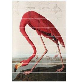 IXXI Audubon Flamingo