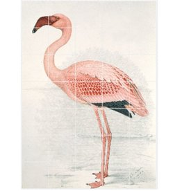 IXXI Greater Flamingo - Large