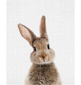 IXXI Rabbit (Double-Sided)